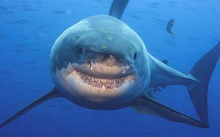 Ikan yang berbahaya bagi Manusia